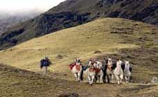 Lares and Machu Picchu Trek